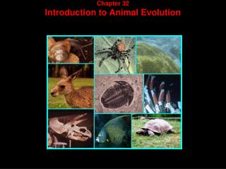 Chapter 32 Introduction to Animal Evolution
