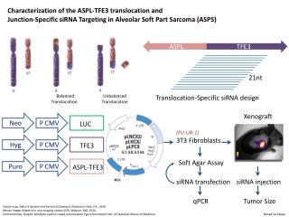 Characterization of the ASPL-TFE3  translocation and