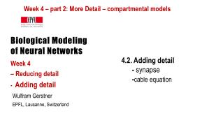 Biological Modeling of Neural Networks