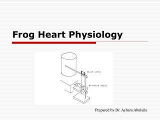 Frog Heart Physiology