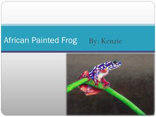 African Painted Frog