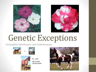Genetic Exceptions