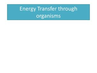 Energy Transfer through organisms