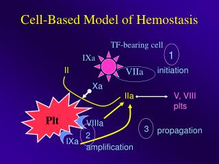 Cell-Based Model of Hemostasis