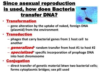 Since asexual reproduction is used, how does Bacteria transfer DNA?