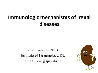Immunologic mechanisms of  renal diseases