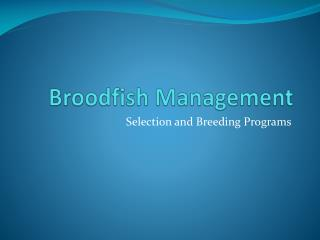 Broodfish  Management