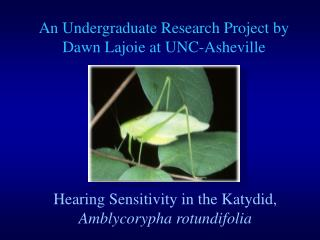 Hearing Sensitivity in the Katydid, Amblycorypha rotundifolia