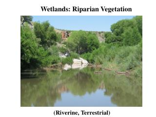 Wetlands: Riparian Vegetation