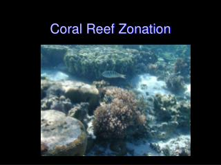 Coral Reef Zonation