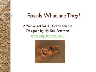 Fossils: What are They?