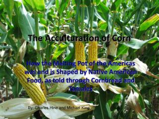 The Acculturation of Corn