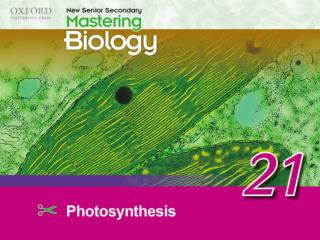 Think about… 21.1	Basic concepts of photosynthesis 21.2	Requirements for photosynthesis