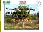 Como Producir Mango sin Escamas en el Norte de Sinaloa