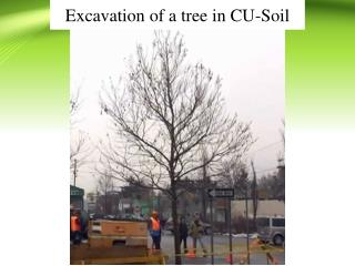 Excavation of a tree in CU-Soil
