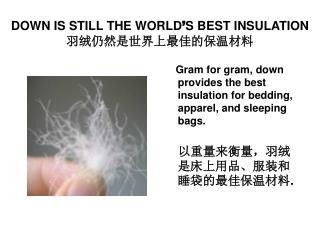 DOWN IS STILL THE WORLD ' S BEST INSULATION 羽绒仍然是世界上最佳的保温材料