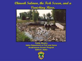 Chinook Salmon, the Fish Screen, and a Vanishing River.