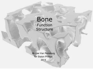 Bone Function Structure