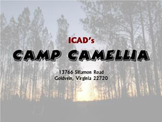 Camp Camellia will provide : Artistic inspiration Art classes and workshops Art exhibitions