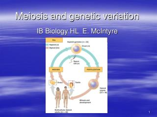 Meiosis and genetic variation
