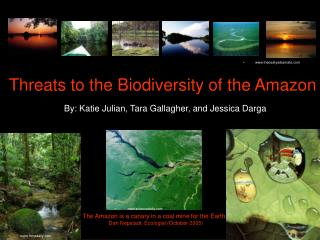 Threats to the Biodiversity of the Amazon