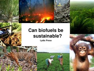 Can biofuels be sustainable? Lydia Press