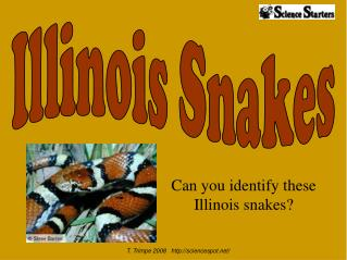 Can you identify these Illinois snakes?