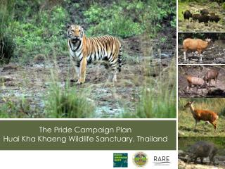 The Pride Campaign Plan Huai Kha Khaeng Wildlife Sanctuary, Thailand