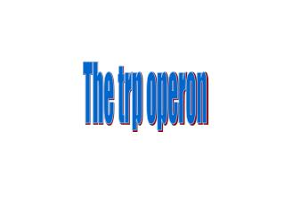 The trp operon