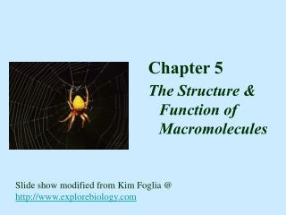 Chapter 5 The Structure & Function of  Macromolecules