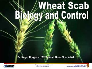 Wheat Scab