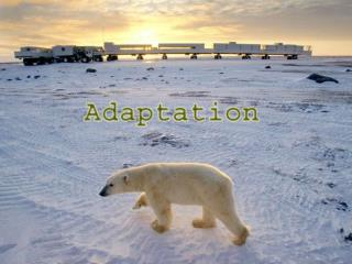 What is Adaptation ?