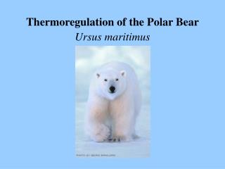Thermoregulation of the Polar Bear  Ursus maritimus