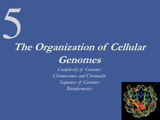 The Organization of Cellular Genomes Complexity of Genomes Chromosomes and Chromatin Sequences of Genomes Bioinformatics