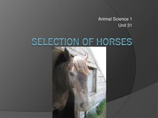 Selection  of Horses