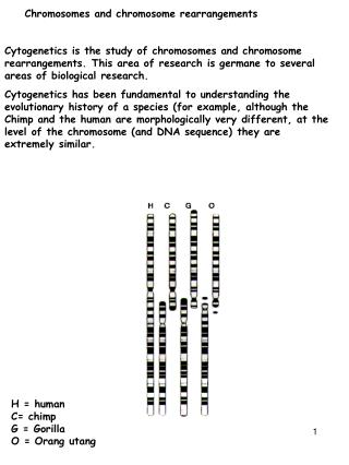Chromosomes and chromosome rearrangements