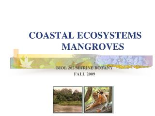 COASTAL ECOSYSTEMS 	MANGROVES