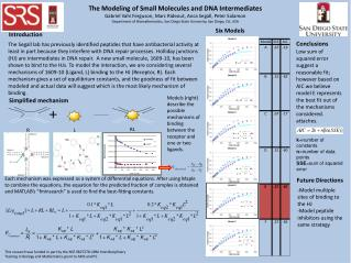 The Modeling of Small Molecules and DNA Intermediates