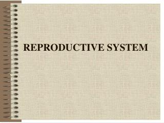 REPRODUCTIVE SYSTEM