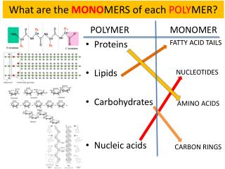 What are the  MONO MERS of each  POLY MER?
