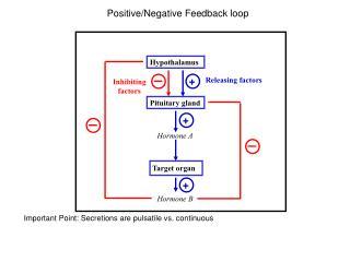 Positive/Negative Feedback loop