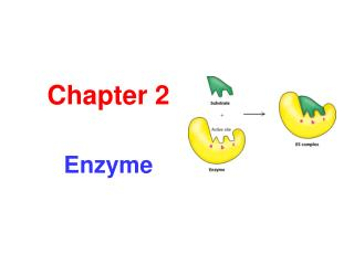 Chapter 2 Enzyme