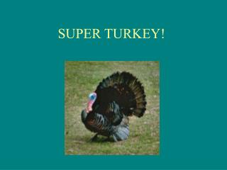 SUPER TURKEY!