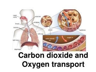 Carbon dioxide and  Oxygen transport