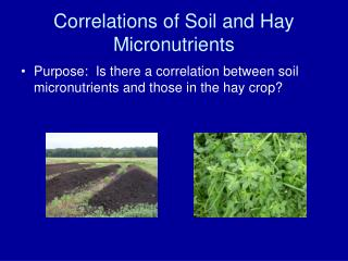 Correlations of Soil and Hay Micronutrients