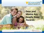 Deer and Moose Are Deadly Road Hazards