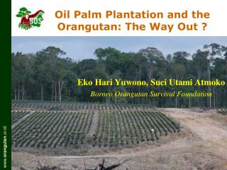 Oil Palm Plantation and the Orangutan: The Way Out ?