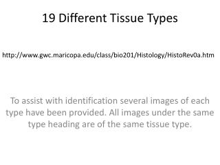 19 Different Tissue Types