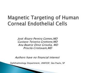 Magnetic Targeting of Human Corneal Endothelial Cells