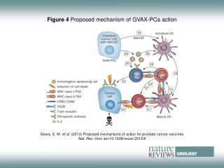 Figure 4 Proposed mechanism of GVAX-PCa action